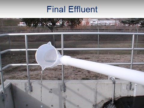WWTP Final Effluent