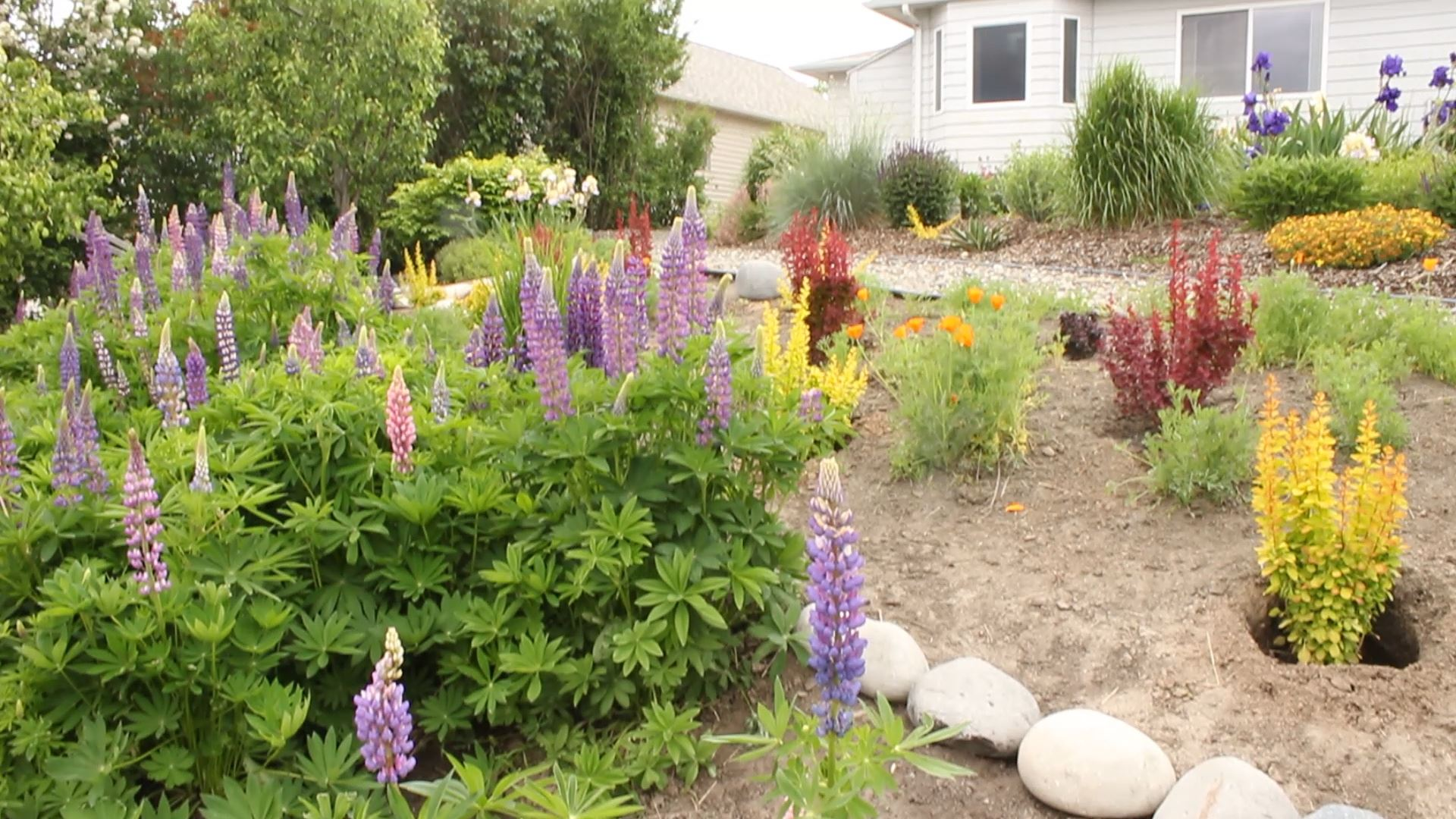 A beautifully xeriscaped yard
